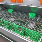 Comfortable Smart Farm Rabbit Cage Q235 Steel Wire / Plastic Material