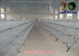 China poultry cage for large scale poultry feedcage on sale