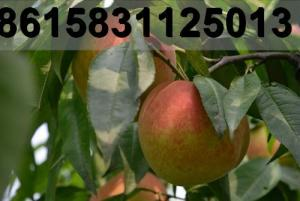 China chestnut importers,mushroom importers,flammulian velutipes importers,pleurotus eryngii importers,auricularia importers,a on sale