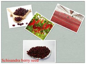 China Schisandra chinensis (Turcz.)Baill,Schisandra sphenanthera Rehd. et Wils.Chinese magnoliav on sale