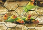 Galvanized Hexagonal Chicken Wire Mesh PVC Coated 1 / 2 ''  Hole Size