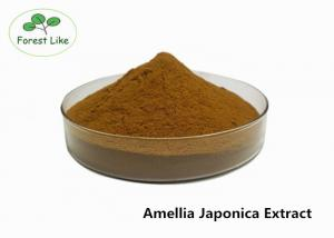 China Agricultural Pesticide Powder Tea Saponin 60% Amellia Japonica Extract on sale