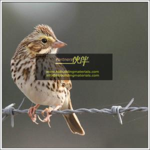 China Fencing suppliers,Barbed wire price,galvanized barbed wire,Single Twist Barbed Wire fence on sale