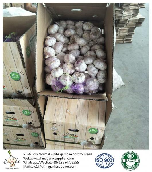 China fresh garlic export to Brazil by Pioneer garlic group