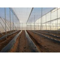 Melon Aphid, Leafminer, Whitefly  ANTI-VIRUS AND NO-THRIPS INSECT SCREEN SELECTION CRITERIA FOR GREENHOUSE