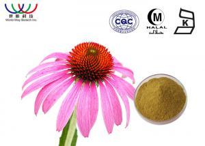 China Natural Herbal  Echinacea Purpurea Extract Chicoric Acid Powder Enhance Immunity on sale