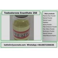 Semi Finished Oil Based Steroids Testosterone Enanthate 250mg/ml Test E 250 Test E
