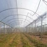 Clear Sheeting Roof Multi Span Polythene Cover For Greenhouse