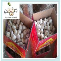 Fresh agriculture products natural white garlic from Jining city