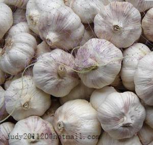 China 4.5cm normal white garlic on sale
