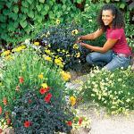 2010最も新しい金属の園芸植物の立場