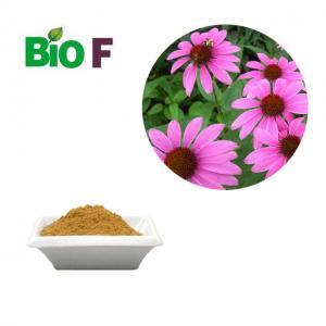 China Antifungal Animal Feed Additive / Echinacea Extract Powder 4% Polyphenols on sale