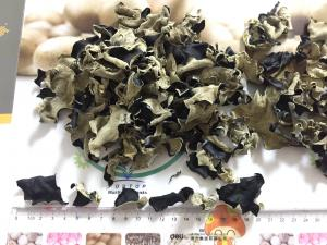 China Factory Price Premium NEW CROP Dried Black Fungus within 5 CM (Auricularia Auricula) on sale
