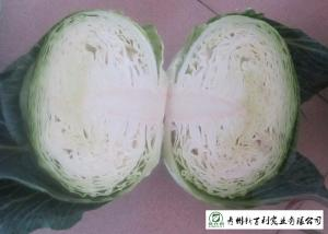 China No Pesticide Fresh Flat Head Cabbage , Nutrition Mini Drumhead Cabbage on sale