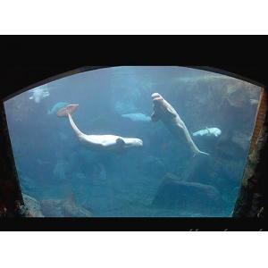 China Huge Cylindrical Aquarium on sale