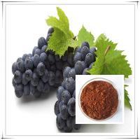 organic grape seed extract powder 95% opc