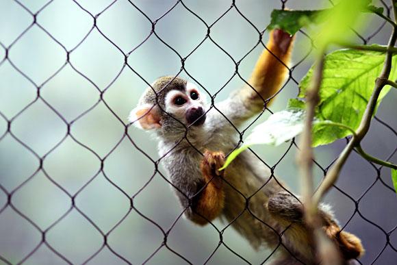 Small Cat Cages & Enclosure Mesh