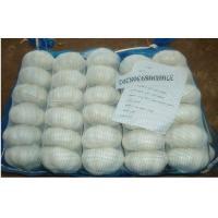 Reducing Cholesterol Cold Organic Fresh Garlic / Allium Sativum For Market, Anti-aging effects