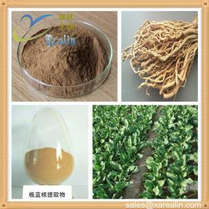 China Radix Isatidis Powder Extract/ Indigowoad Root Extract on sale
