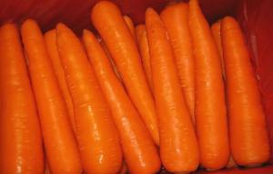 China Delicious Rich Carotene Organic Carrot Containing Carotene-α Anti-Cancer on sale