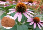 Whole Herb Antibacterial Plant Extracts Echinacea Purpurea Powder Soluble In Water