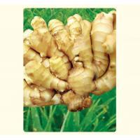fresh ginger and garlic