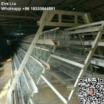 poultry farm hen cage for chicken rearing for sale for bangladesh (whatsapp +86 18333844891)