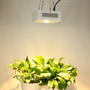 Indoor Warm White 3000k Full Spectrum Cree Cob Led Grow Lamp