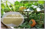 China Organic Aminoacido Fertilizzante Produttore Chelate Mg Fertilizer wholesale