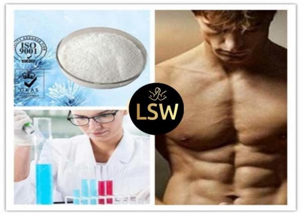 White Bodybuilding Steroids Hormone CAS 58-20-8 Testosterone