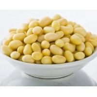 Pharmaceutical Grade Plant Protein Powder / Soy Bean Extract Isoflavones 40.0%