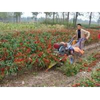 China Diesel engine mini chili swather (windrower) price, sell pimento reaper with hand tractor on sale