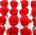 Red Real Forever Rose , Real Flowers That Last Forever For Wedding Decoration