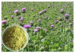 Liver Protection Silybum Marianum Extract Light Yellow Powder CAS 65666 07 1