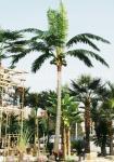 palmeira artificial grande do coco, palmeira do coco, palmeira da data