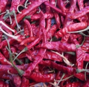 China dry red chilli on sale