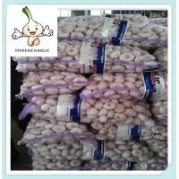 China Top quality fresh white garlic ,pure white -normal white fresh ginger and garlic on sale