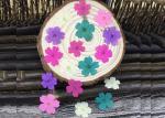 Handmade Dye Verbena Real Pressed Flowers Color Optional For Specimens Plant