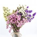 Forget Me Not Limonium Statice Flower , Everlasting Preserved Fresh Flower