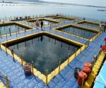 China HDPE pontoon for Aquaculture & Fish Farming wholesale