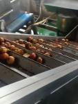 Apple Juice Fruit Juice Processing Line