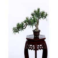 China Buddhist Bonsai Pine Tree 25*52cm No Watering Trimming Timeless Beauty on sale