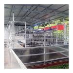 Sheep 100 Points Herringbone Milking Parlor automatic milking system