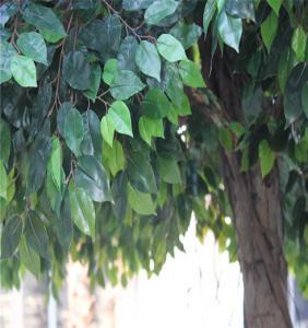 China plastic  banyan tree, artificial ficus tree on sale