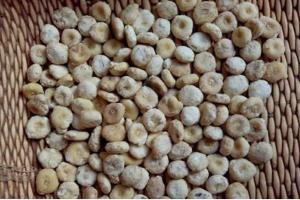 China RHIZOMA ARISAEMATIS Arisaema heterophyllum Blume root for herb medicine Tian Nan Xing on sale