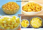 China Good Taste Canned Sweet Corn Kernels In Brine 425g High Temperature Sterilization wholesale