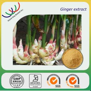 China China manufacturer supply high quality 5% gingerols ginger extract on sale