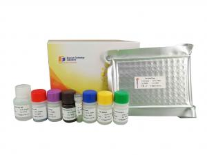 China Endothelin Rat Elisa Kit , Mouse Elisa Test Kit With High Precision / Specificity on sale