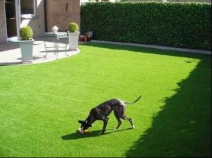 China 22mm Dtex10500 C Shaped Pet Artificial Grass Ornaments Fake Turf Grass , 3/8 Gauge on sale