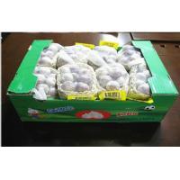 5.0cm Organic Fresh Garlic Pure White Contains Vit. B1 B2 B3 For Restaurant, Anti-fatigue effect